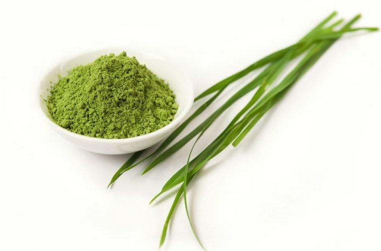 Barley Grass Juice Powder Health Benefits