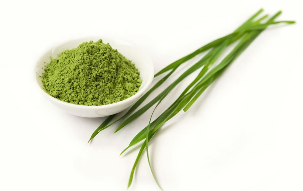 Barley Grass Juice Powder Health Benefits
