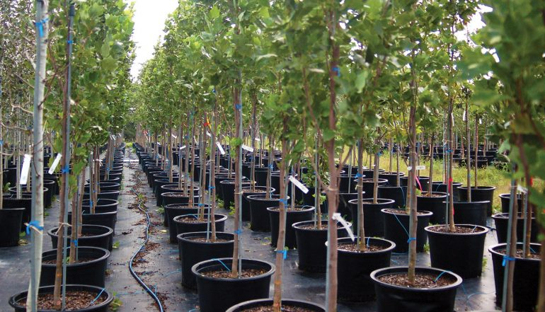 How To Buy A Tree From A Nursery