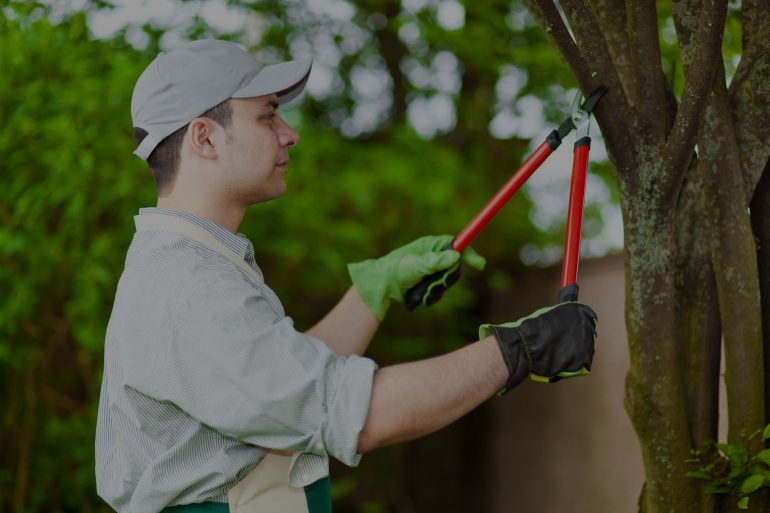 how to find a certified arborist