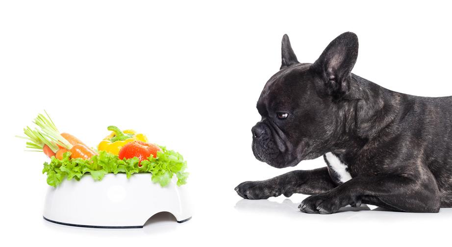 Holistic Dog Food Companies