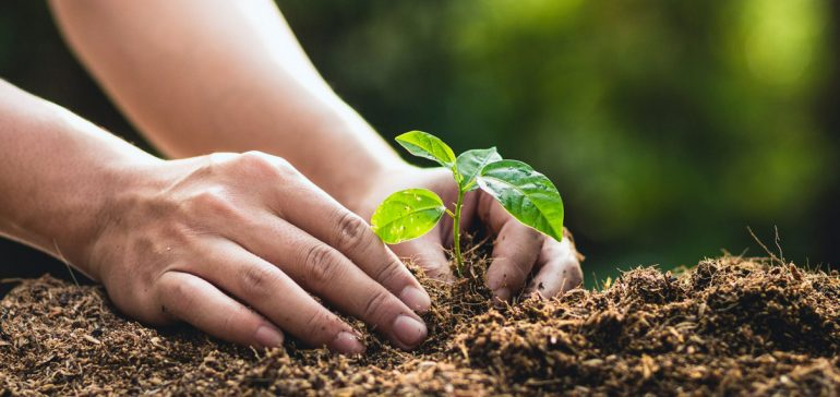 How To Plant A Tree Correctly
