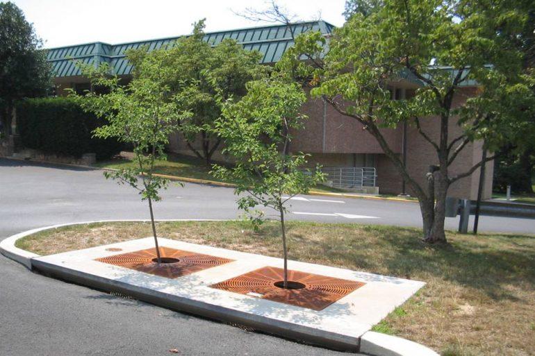 trees help reduce stormwater runoff