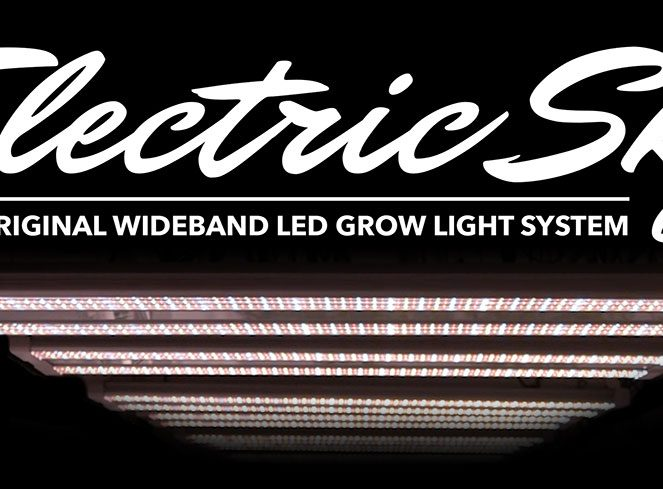 electric sky led lights for sale