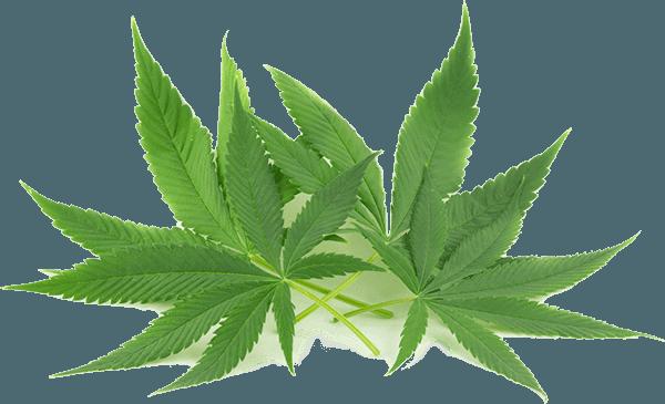 Is Marijuana Good For High Blood Pressure?